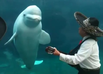 Beluga Mariachi